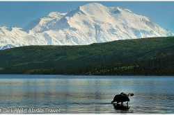 Bull Moose In Wonder Lake with Mount McKinley Denali National Park - (c) Laurent Dick - Wild Alaska Travel