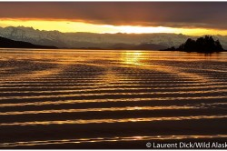 Ripple Effect Of Alaska Boat Wake - (c) Laurent Dick - Wild Alaska Travel