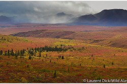 Fall Colors Denali National Park Tour - (c) Laurent Dick - Wild Alaska Travel