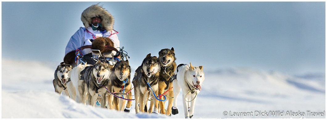 an overview of the idatarod dogsled race in alaska Is the iditarod for the dogs aili, of ray, minnesota, and his team were taking a break at the nikolai, alaska the race is the same length every.