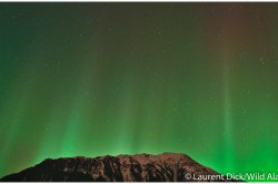 Northern Lights Over Bullard Mountain - Photo (c) Laurent Dick - Wild Alaska Travel