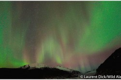 Northern Lights over Mendenhall Glacier - Photo (c) Laurent Dick - Wild Alaska Travel