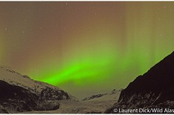 Northern Lights over Mendenhall Glacier -- Photo (c) Laurent Dick - Wild Alaska Travel