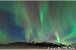 Northern Lights Mendenhall Glacier - Photo (c) Laurent Dick - Wild Alaska Travel