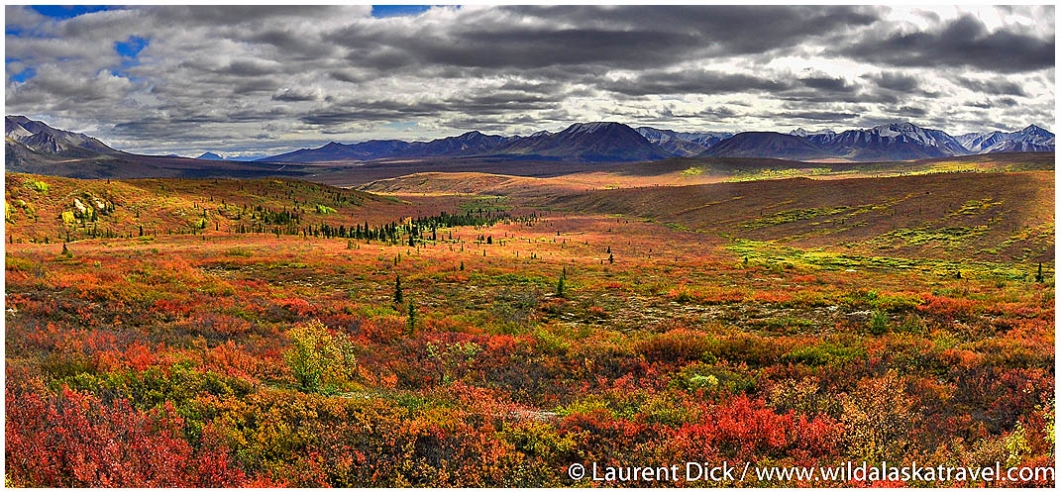 Fall Colors Denali National Park - Photo (c) Laurent Dick