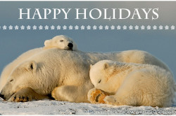 Happy Holiday from Wild Alasak Travel