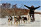 Alaska Iditarod Finish and Northern Lights Tour - Photo (c) Laurent Dick - Wild Alaska Travel