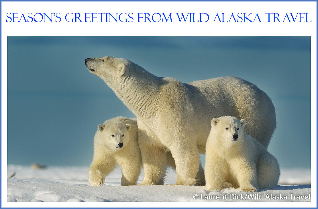 Seasons Greetings from Wild Alaska Travel - Photo (c) Laurent Dick - Wild Alaska Travel