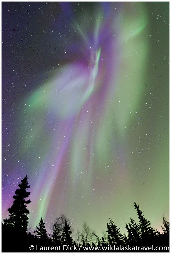 Alaska Northern Lights Tour with Wild Alaska Travel - Photo (c) Laurent Dick